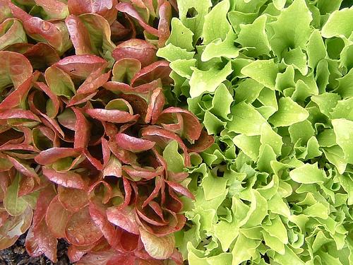 salade-asdfawev.jpg