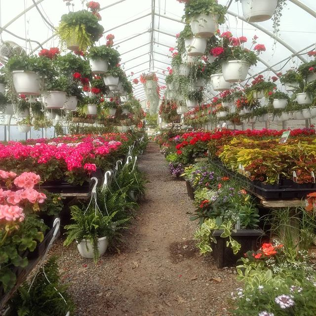 It's a great day for planting!  Stop by Homestead Gardens for a wide selection of beautiful, blooming plants! We're open until 8pm.
