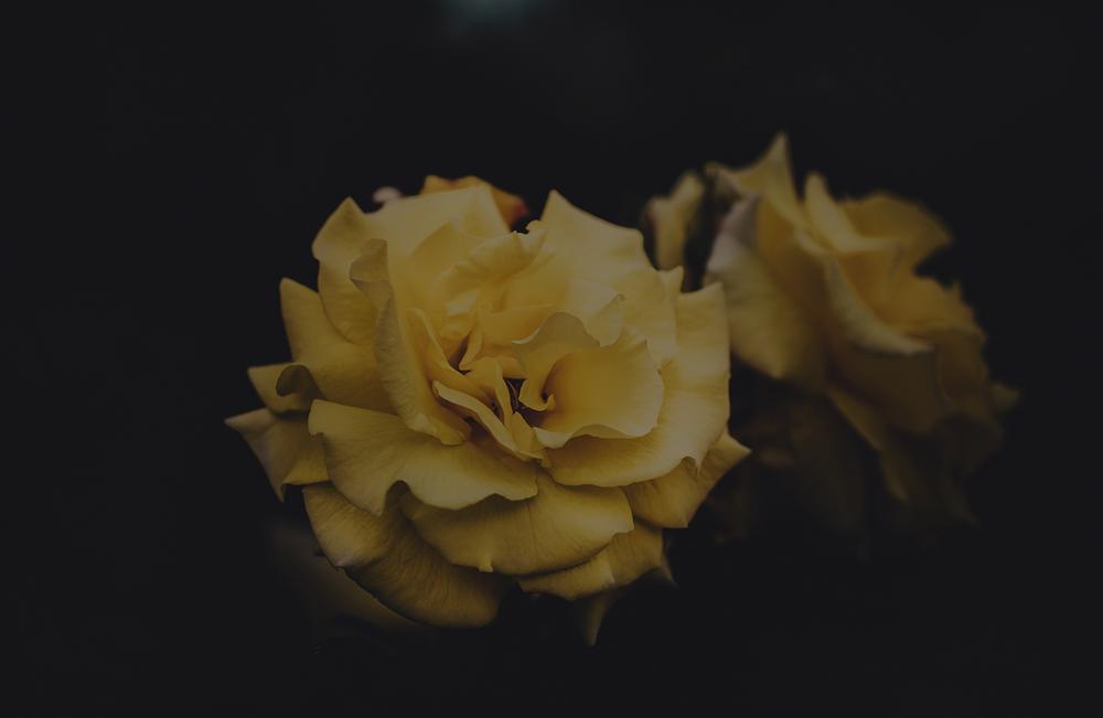 rosesyellow.png