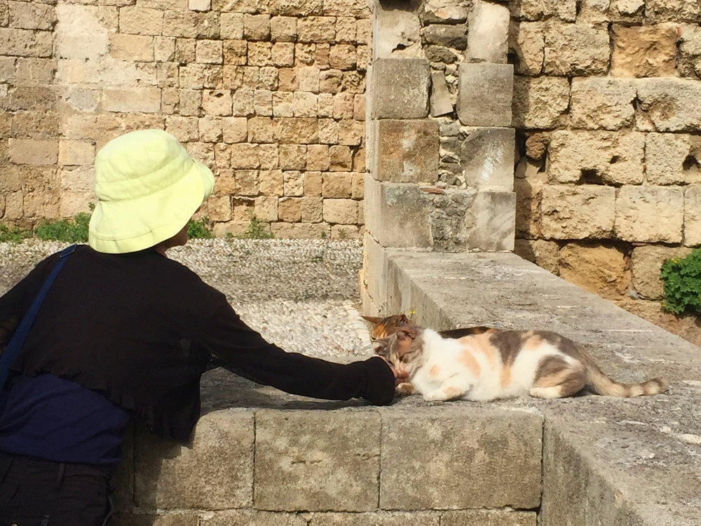 The cats of Rhodes came to greet Yumi.