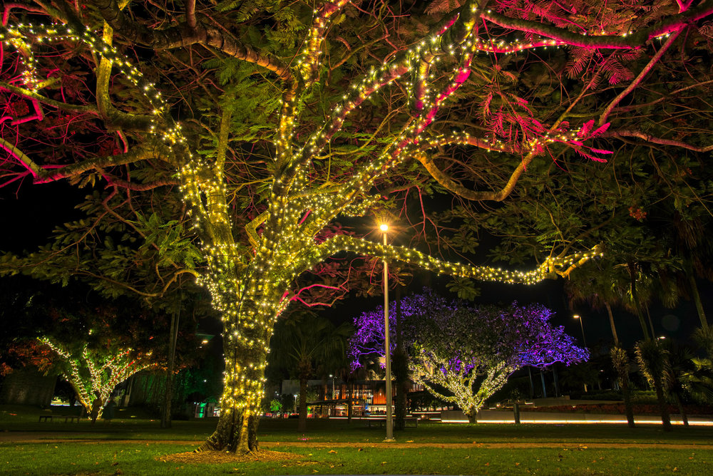 The lights in the ground change colours which cast up into the trees.