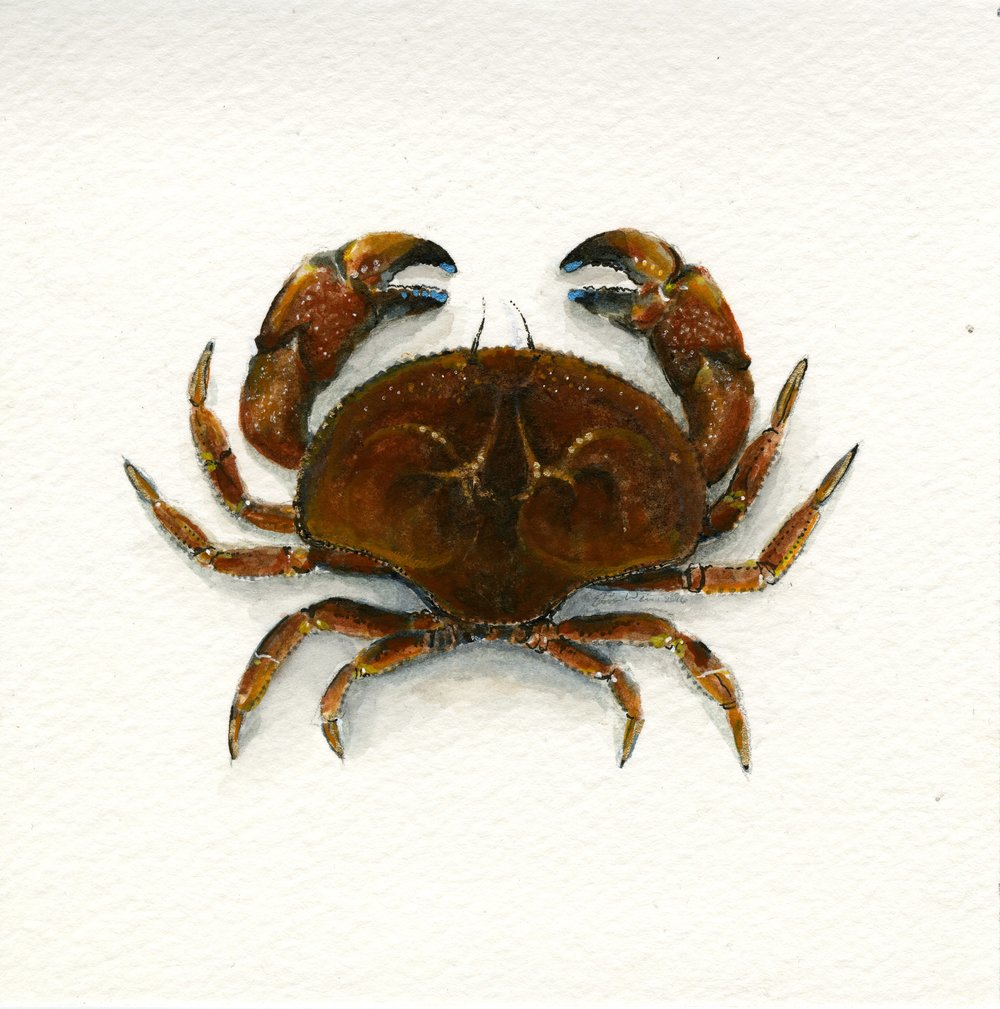 crab004.jpg