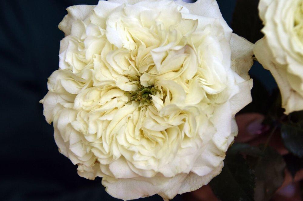 - Mayra's white