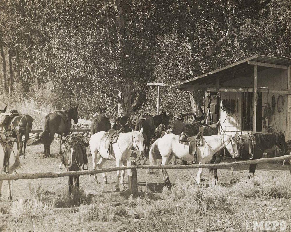 Vintage trailriding: Trailhorses and mules saddled and ready to hit the trail! Some of the corrals and buildings have changed, but everything else remains the same