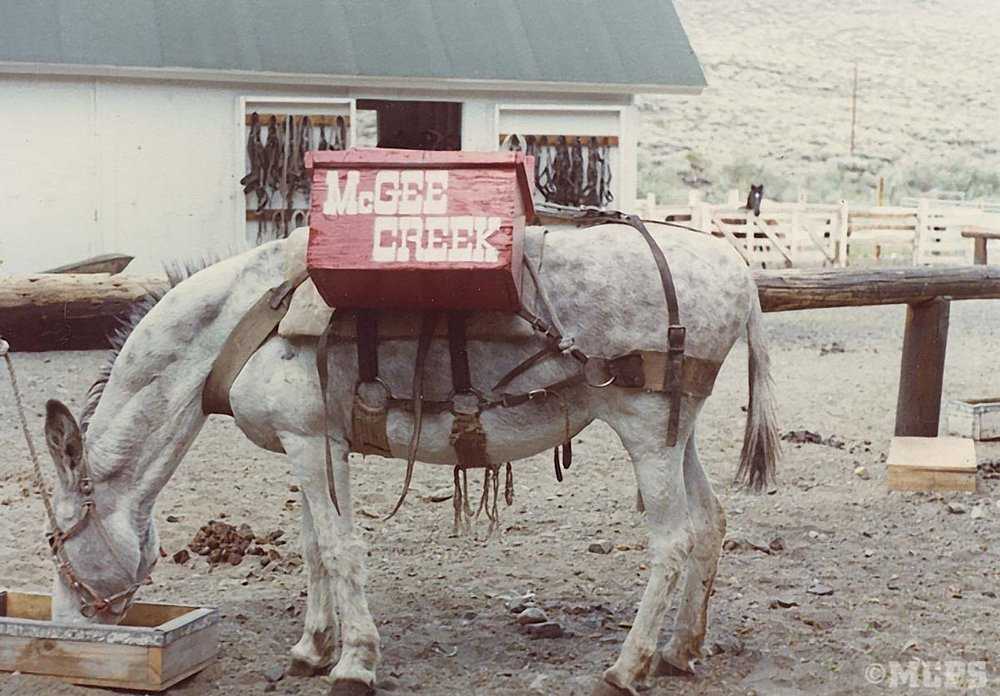 """Back in the old days, families could take a trip with the """"rent-a-burro"""" program. Here's the sweet pack burro named """"Big Daddy"""""""