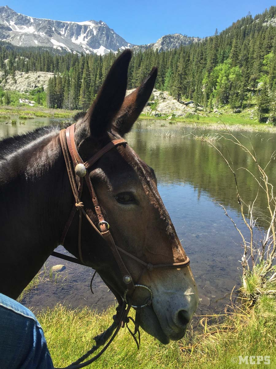 Beautiful Gracey takes in the view at the Beaver Ponds in McGee Canyon during a mule ride