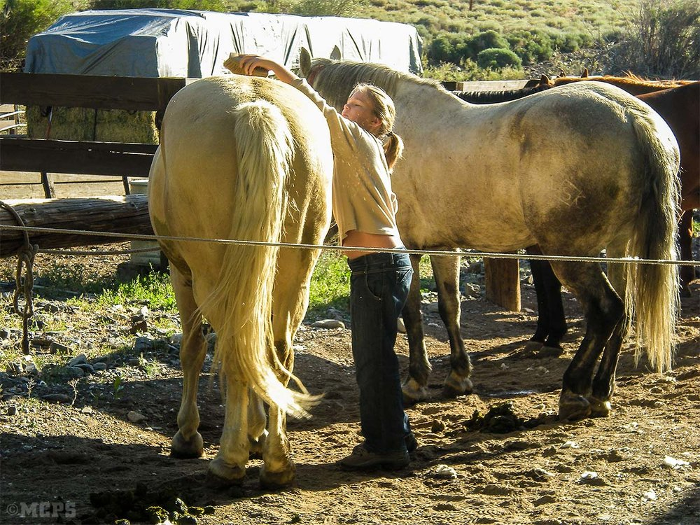 Girls and horses: A young intern learns to groom her horse. Sunny has taught many youngsters the ways of the world!