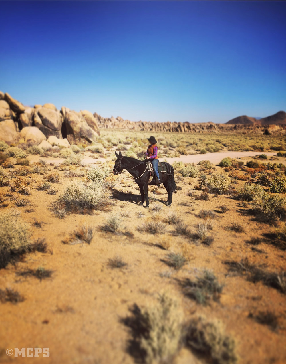 McGee Creek Pack Station offers mule and horserides in the Alabama Hills near Lone Pine, CA.
