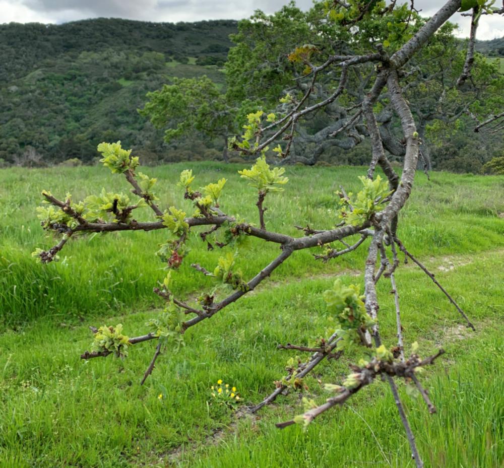 green branch.png