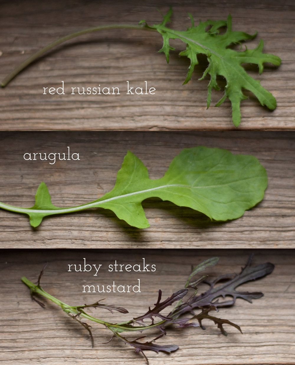 Just a few of the greens varieties you'll find in your Salad Club mix.