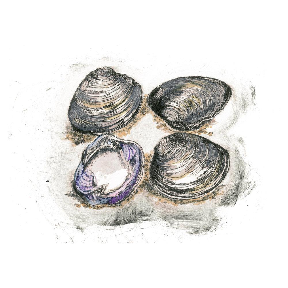 Clams, 12×12 $95