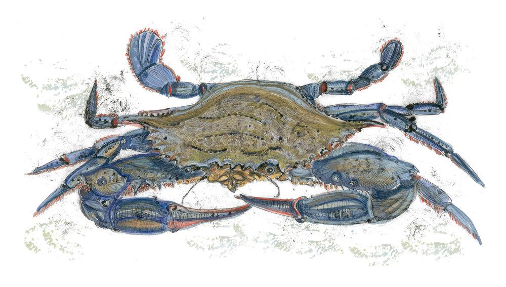 Blue Crab, 12×15 $95
