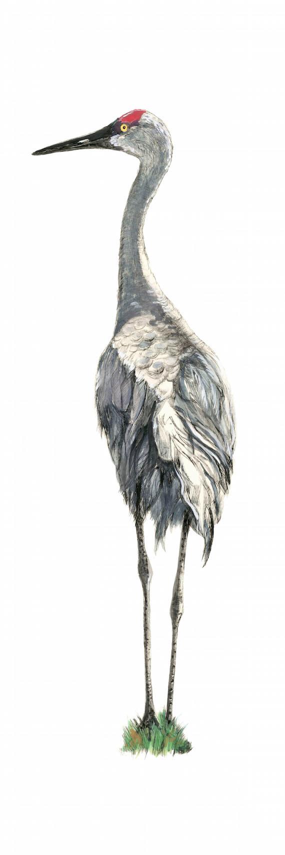 Sandhill Crane, 31×11 $150
