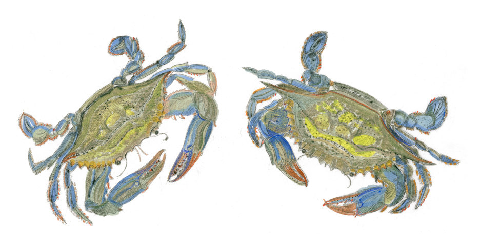 Two Blue Crabs, 17×21 $125