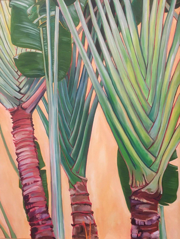 Traveler Palm, 40 x 30