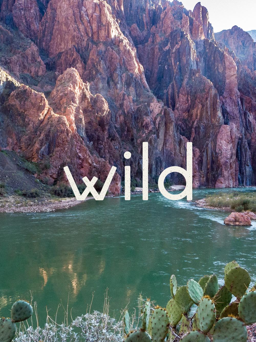 wild6.jpg