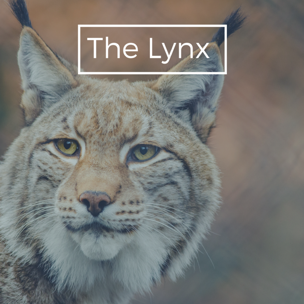 Lynx Plan - Because, who doesn't love fun names!