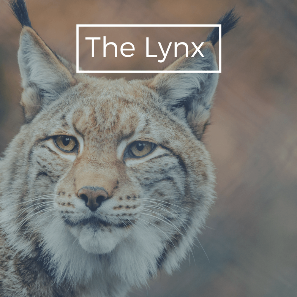 Add-On for New Agents - The best way to succeed in Real Estate!Plan of your choosing + Lynx Plan