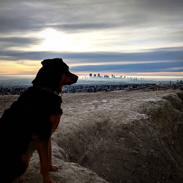 Enjoying the view  #yyc #yycdogs #yycskyline #calgary #calgaryviews