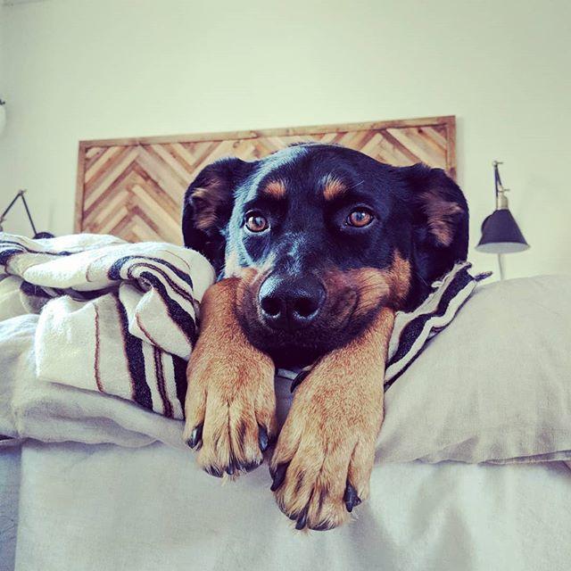 Chubby cheeks  #muttsofinstagram #rescuedogsofinstagram