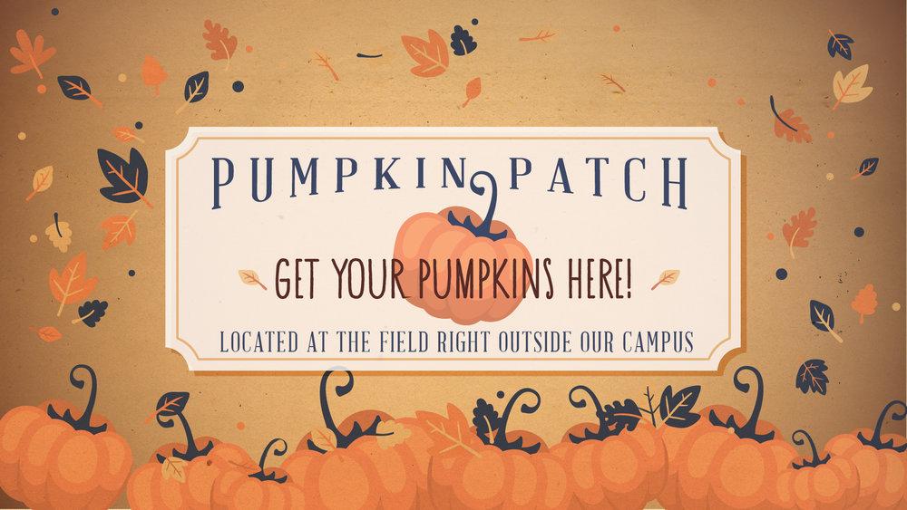 Pumpkin Patch General.jpg