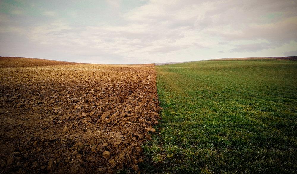 half-brown-half-green-field-LR.jpg