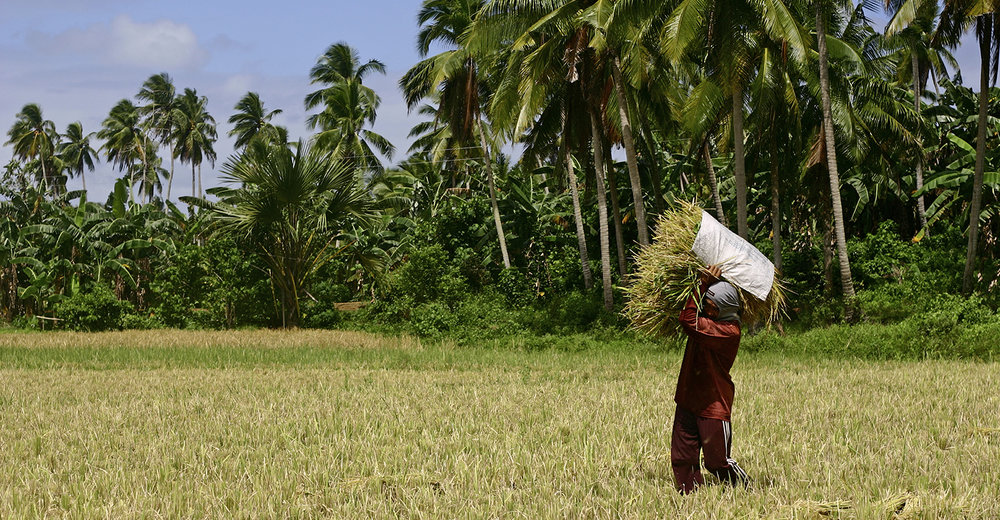 Flickr-man_carrying_bundle_rice-CC_BY-NC-ND_20-1500x780.jpg