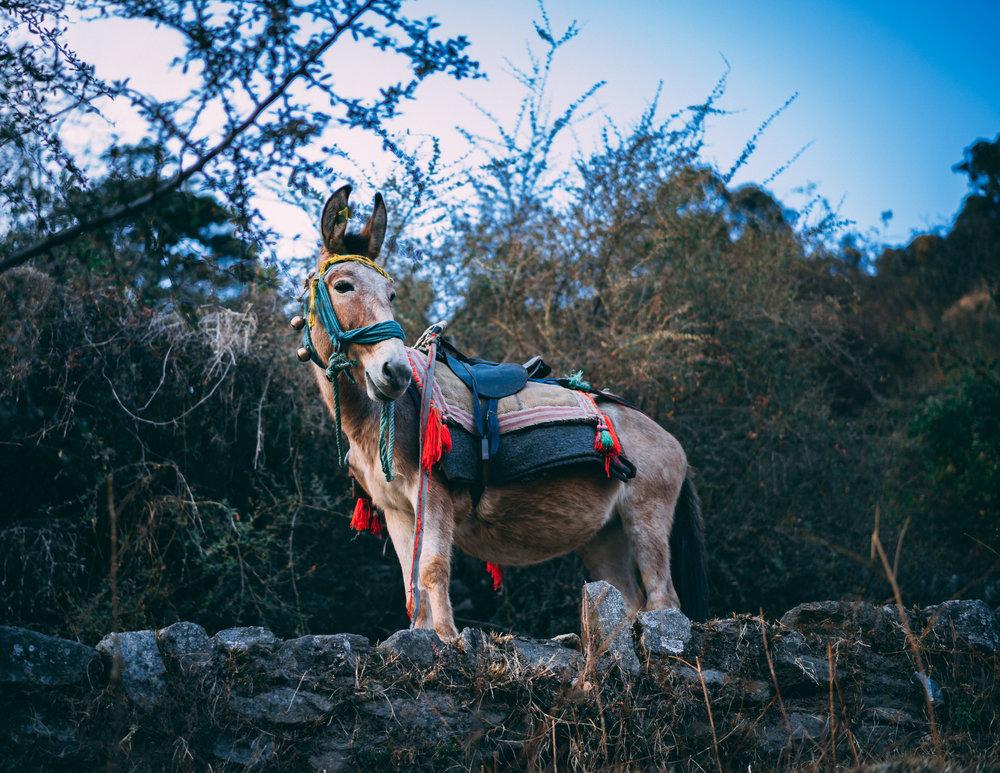 c7db5b0fd84 Balaam s Donkey — 1517