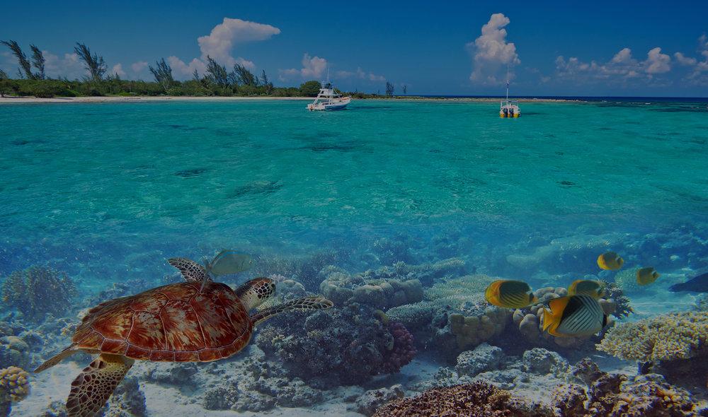 幻想在这里,你即将开启的浪漫奇幻之旅,与海龟一同畅游,享受风帆冲浪。当然,你也可以躺在海滩上,一边品着管家精心调制的鸡尾酒,一边远眺这绝世美景。 -