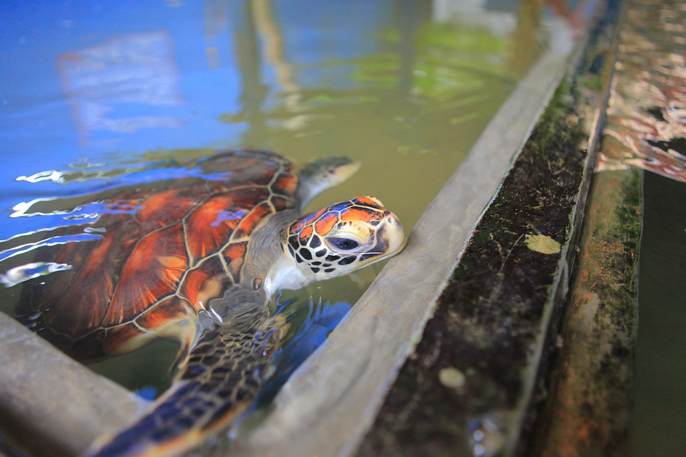 AniVillas_SriLanka_TurtleHatchery