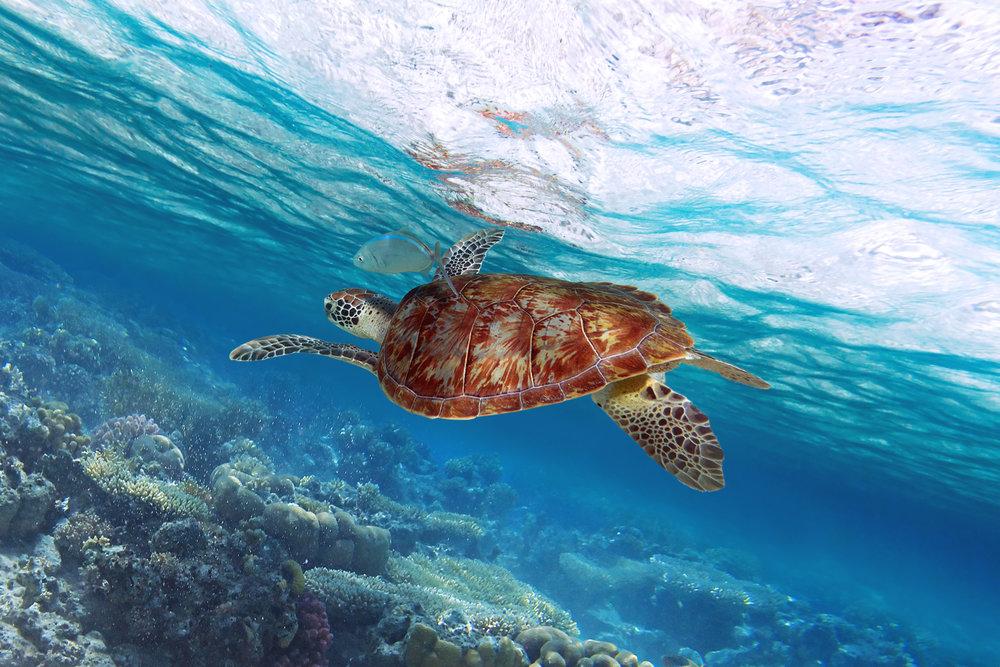 AniVillas_Dominican_Snorkelingscubadiving
