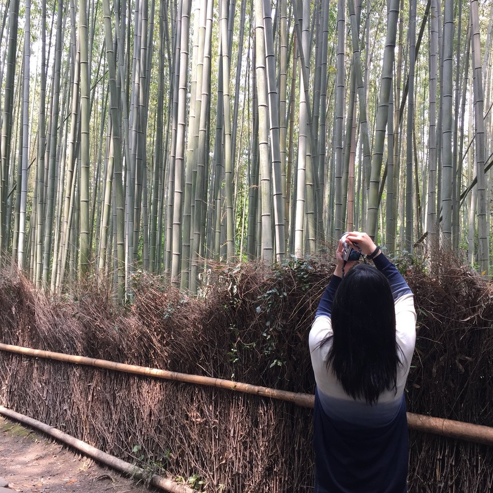 Back of girl taking pictures in bamboo forest