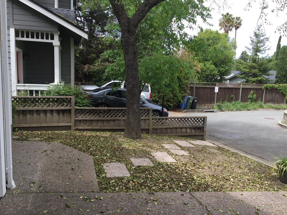 Front Yard with lawn removed & stepping stones added.JPG