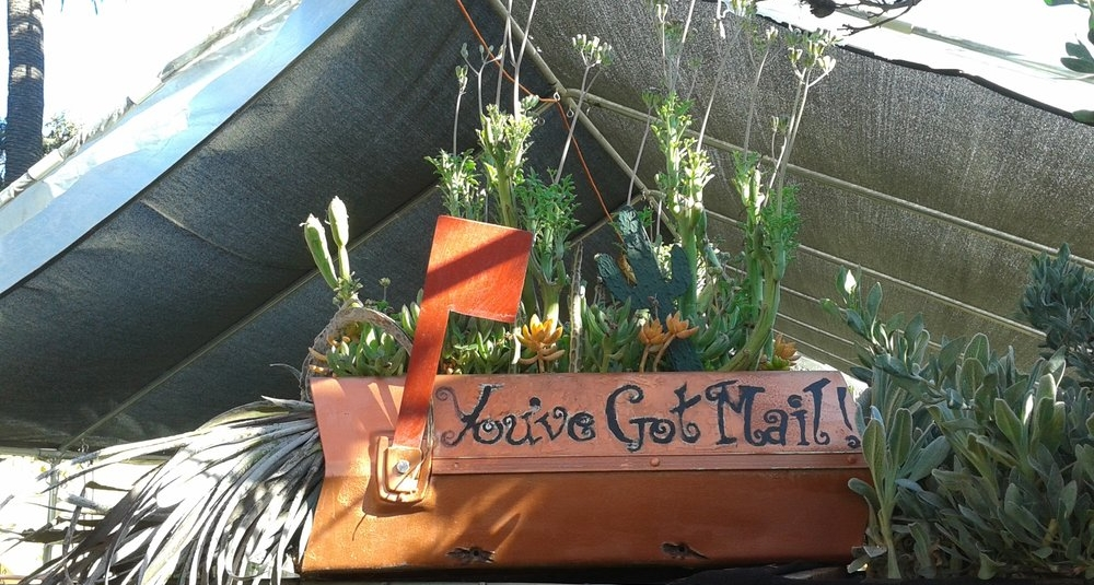 New Life bursting with succulents! - The old mailbox is currently displayed on the ground next to the new mailbox with a cheery new message.