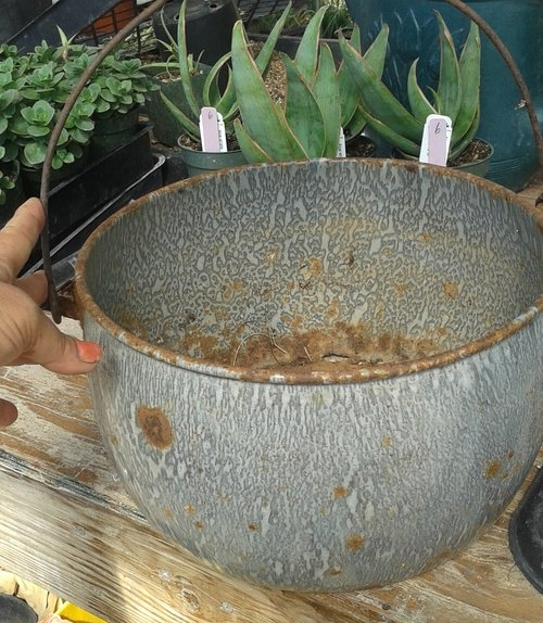 This approximately 100 year old family heirloom was given a new face lift. This was achieved by sealing the wood handle and planting the metal bucket with a mix of succulent and non-succulent plants that would echo the color of the enamel.