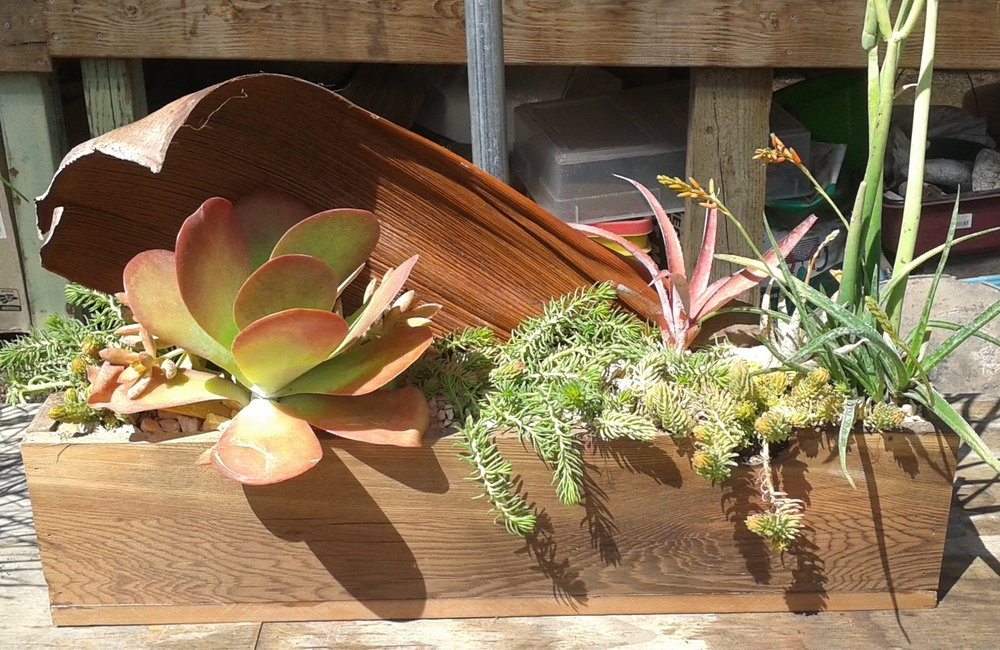 Succulent filled Redwood Box with Jelly Palm Sheath Backdrop