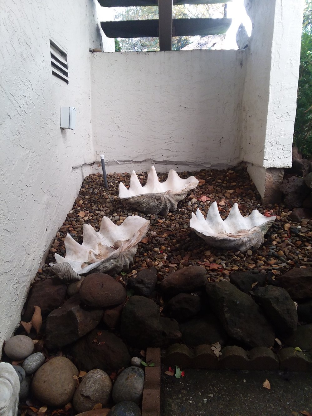 Giant Clam Shells Under Stairwell on Initial Consultation on 11-24-18.jpg