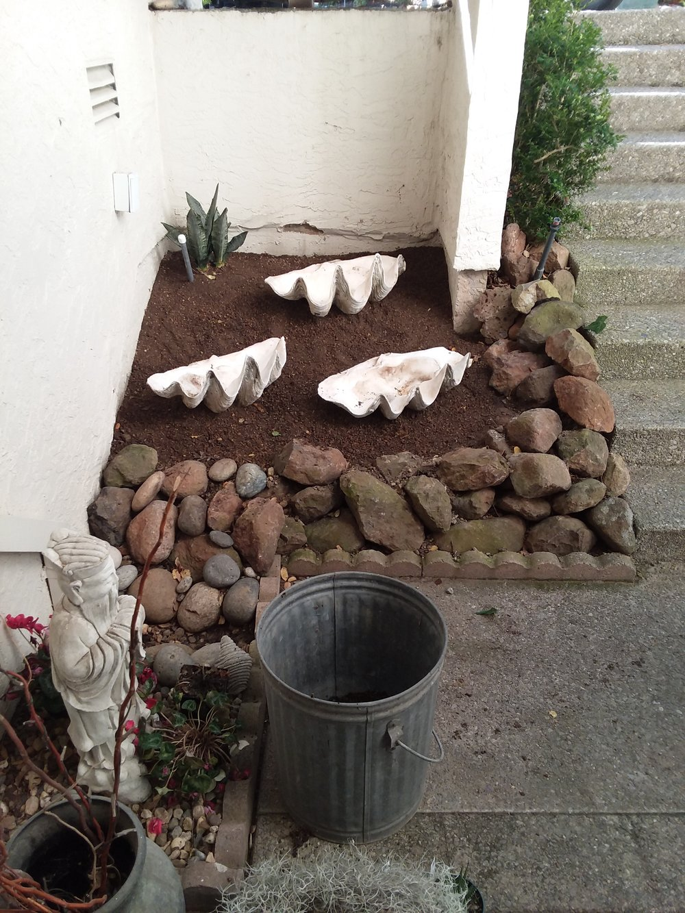 Giant Clam Shells Under Stairwell with first in-ground plant installed on 12-29-18.jpg