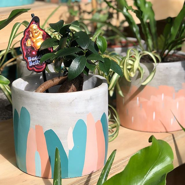 There's some kind of big game on this weekend and our shop opening hours have temporarily changed to 10am to 2pm (just for this Saturday). You can still catch us all weekend at @therosestmarket with our friends from @jakandcodesign. Our stall will be bursting with cute lil hand painted pots and beautiful lush kokedamas! See you then! 😘🌱🌿🍃🙌