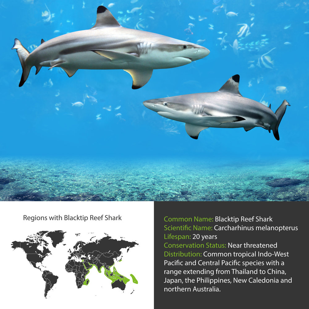 Blacktip Reef Shark Distribution