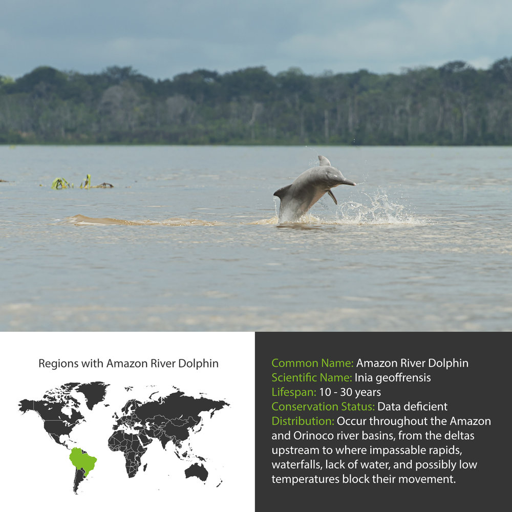 Amazon River Dolphin Distribution