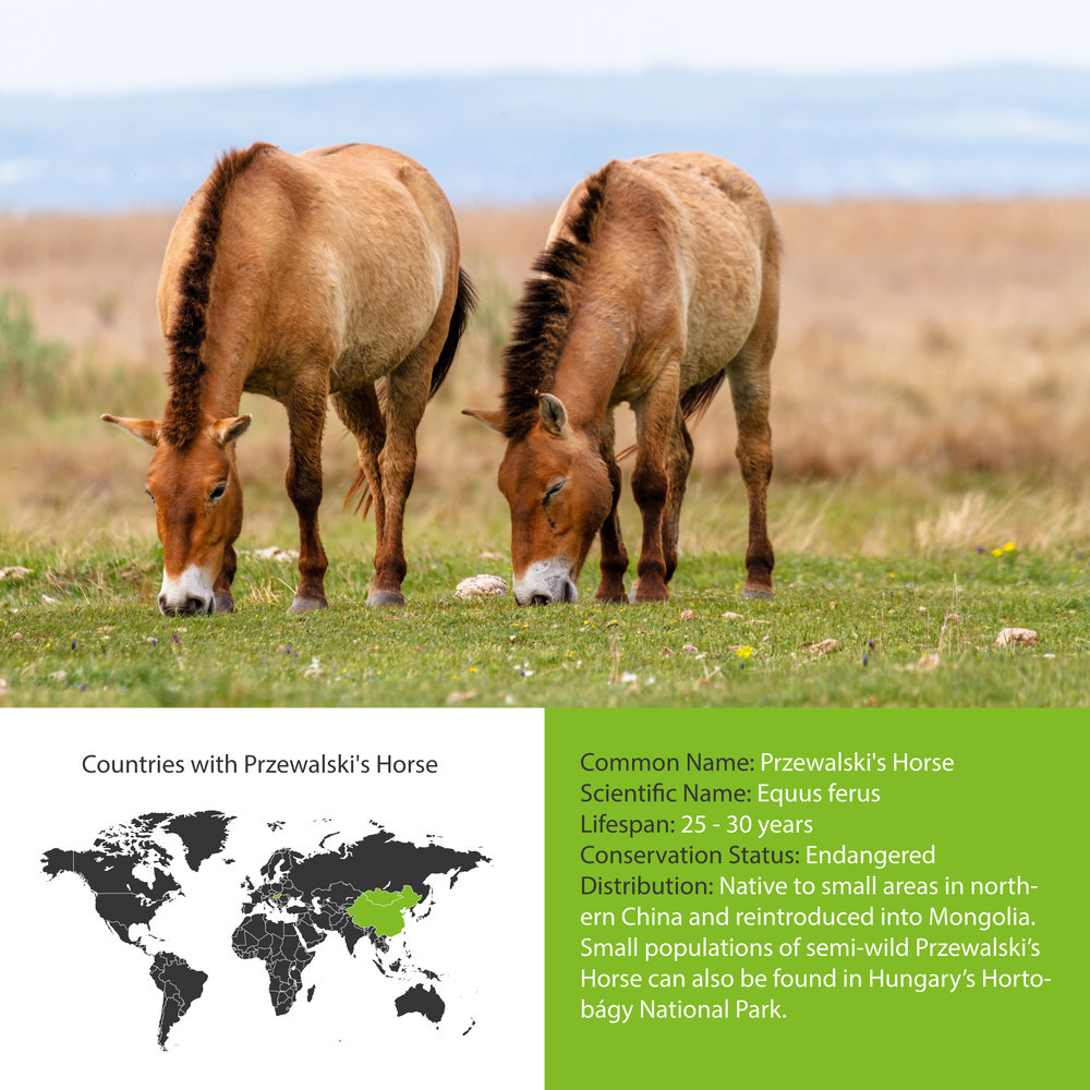 Przewalski's Horse Distribution