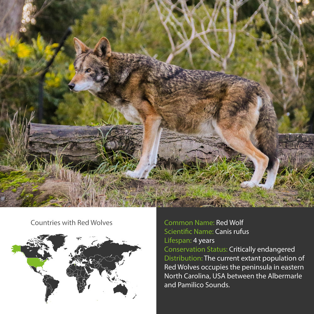 Red Wolf Distribution
