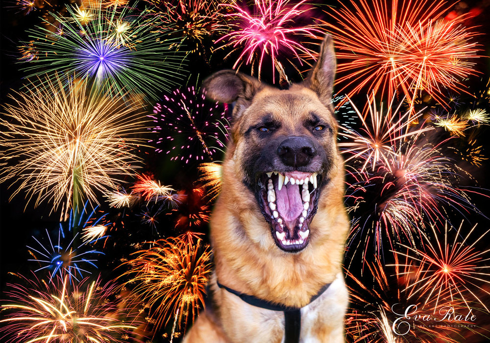 Fireworks and dog