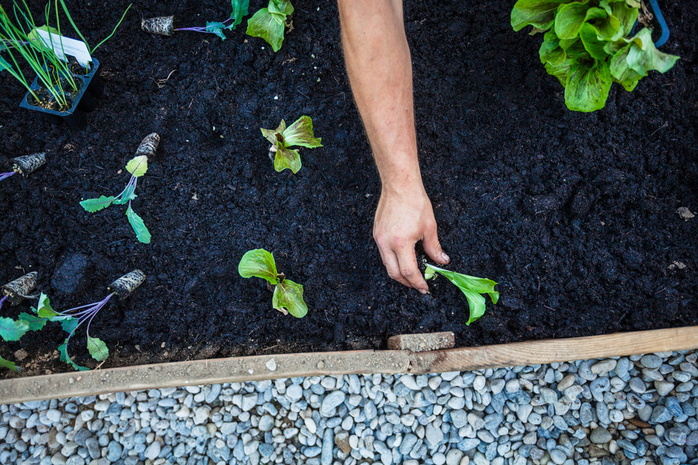 ©TomWoollard_OBI_editorial-lifestyle-gardening-hand-planting-young-plant-in-soil-garden-bed.jpg