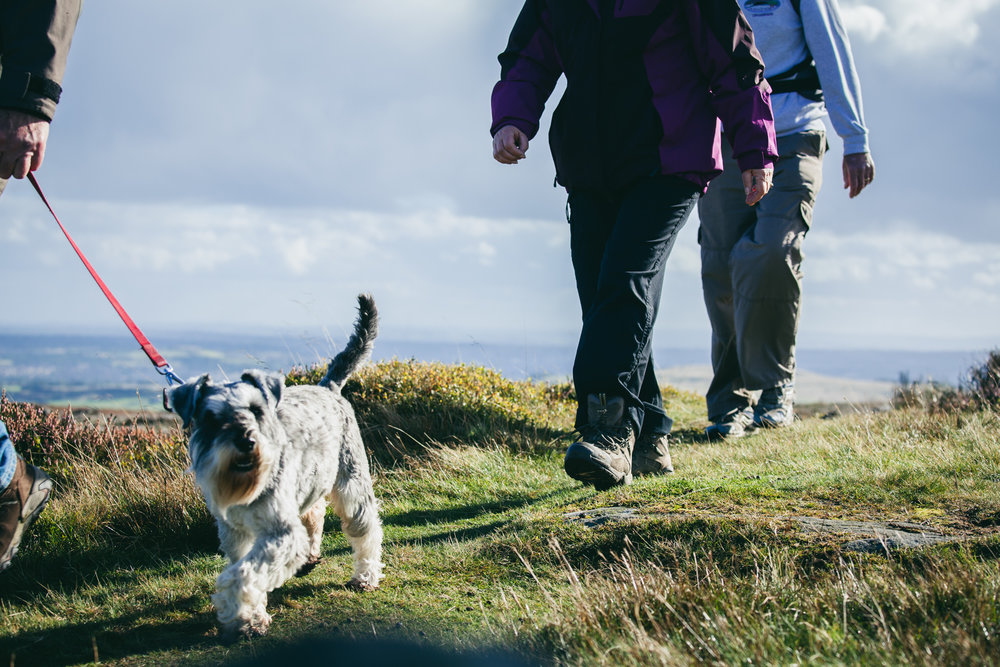©TomWoollard_Walkers_Are_Welcome-editorial-lifestyle-hikers-walking-dog-sunny-day-countryside.jpg