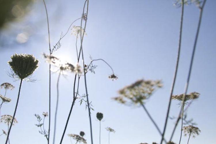 botanicals-750-004.jpg