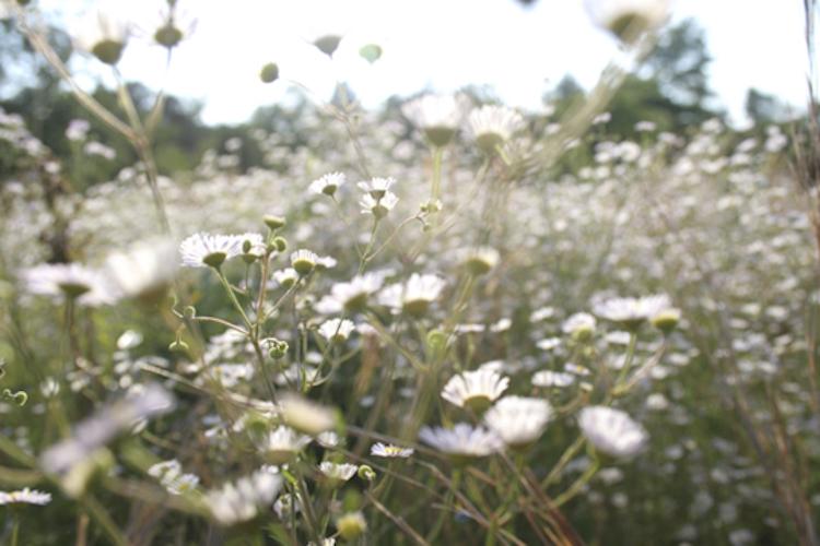 botanicals-750-007.jpg