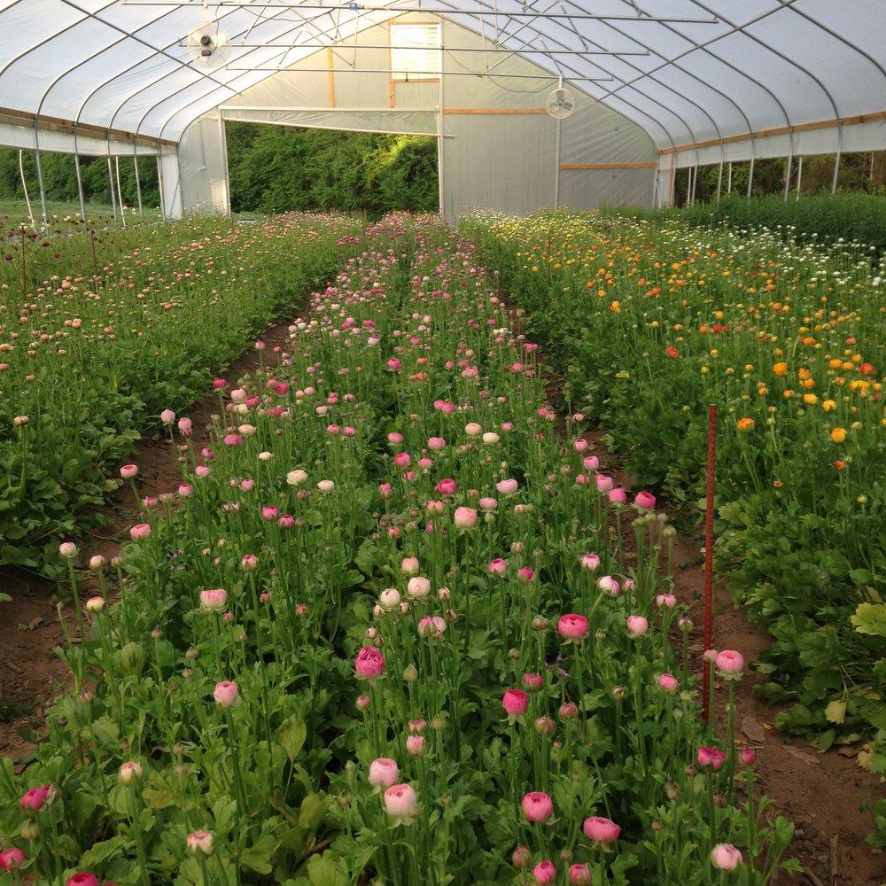 3PorchFarm-organicflowerfarm-Athens-ga.jpg