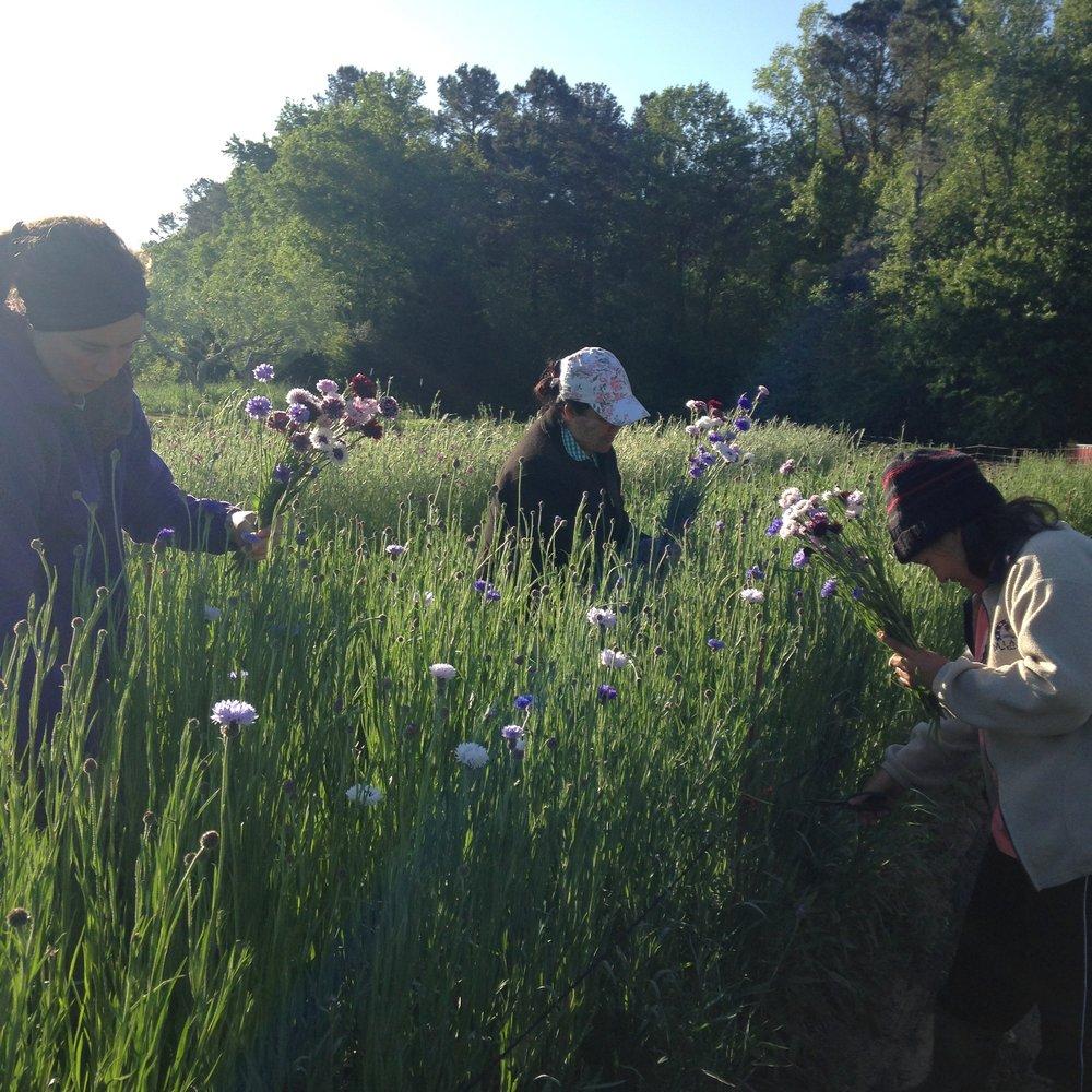 refugee-flower-farmers-3PorchFarm-Athensga.jpg
